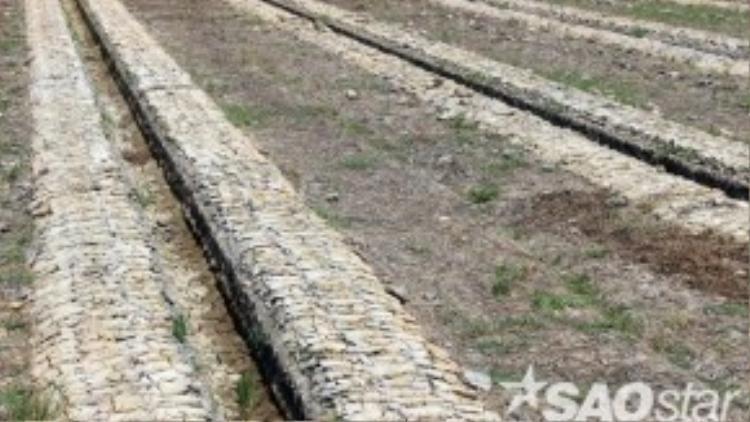 Đầu năm 2016, các tỉnh đồng bằng sông Cửu Long đối diện tình trạng hạn hán kéo dài và nước biển xâm nhập gây thiệt hại nông nghiệp. Trà Vinh là một trong 8 tỉnh ở Miền Tây công bố thiên tai do hạn hán và xâm nhập mặn. Trước đó là Tiền Giang, Bến Tre, Kiên Giang, Long An, Sóc Trăng, Cà Mau, Vĩnh Long. Một cánh đồng ở huyện Tiểu Cần (Trà Vinh) khô trắng, nứt nẻ, nông dân đã đào liếp trồng hoa màu nhưng không trồng được vì thiếu nước tưới.