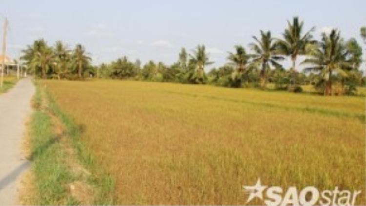 Tại tỉnh Bến Tre, nhiều nông dân khóc ròng vì không còn cách nào cứu những đồng lúa cháy đỏ, thiệt hại hoàn toàn do hạn mặn hoành hành nghiêm trọng nhất 100 năm qua tại nơi được đánh giá là vựa gạo lớn nhất cả nước.