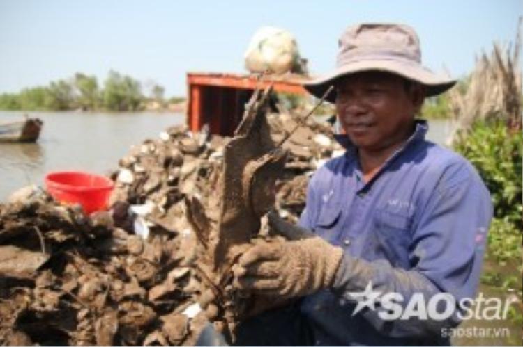 Tình trạng xâm nhập mặt cũng khiến hàng trăm hộ dân nuôi hàu ở xã Thừa Đức và Thới Thuận, huyện Bình Đại, tỉnh Bến Tre lâm vào cảnh trắng tay, mang nợ do hàu chết hơn 90% khi chuẩn bị xuất bán.