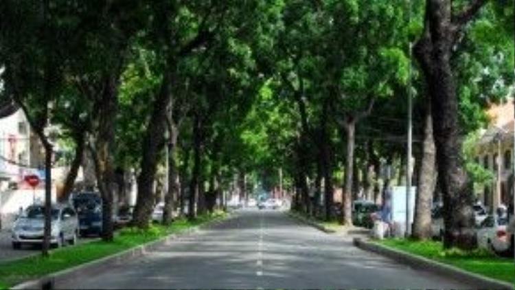 Tổng thể cây xanh cần bứng dưỡng, đốn hạ trên đường Tôn Đức Thắng Quận 1 - nơi hạng mục nhà ga Ba Son, gói thầu 1b dự án xây dựng tuyến đường sắt Đô thị số 1 Bến Thành - Suối Tiên đi qua.