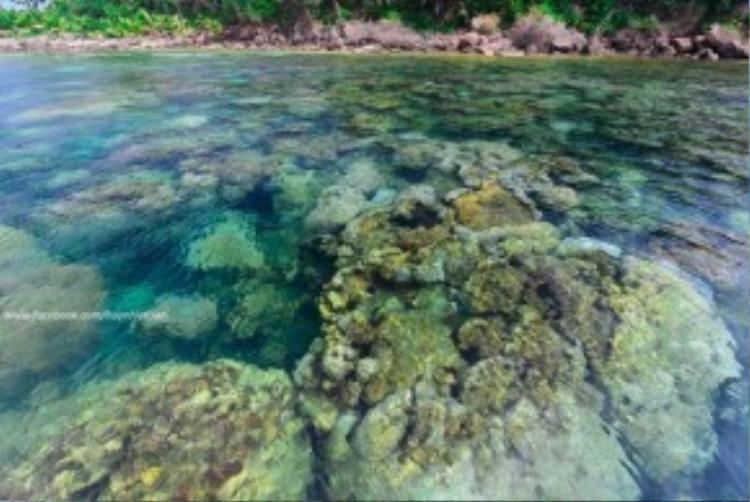 Hòn Móng Tay có những bãi san hô tuyệt đẹp.