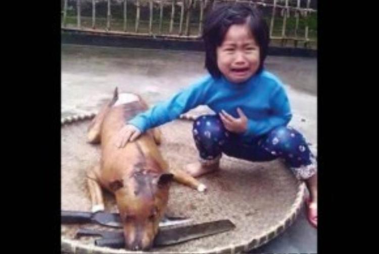 Tấm ảnh gây chấn động một thời - đứa trẻ đau đớn trước món ăn của cả gia đình là người bạn thân của mình.