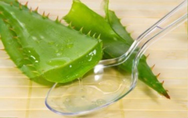Phần gel của lá nha đam có tính sát khuẩn và gây tê nên rất tốt trong việc trị mụn. Bên cạnh đó, phần gel này cũng có tác dụng làm tăng tuần hoàn máu giúp làn da mềm mại, dưỡng ẩm tốt hơn.