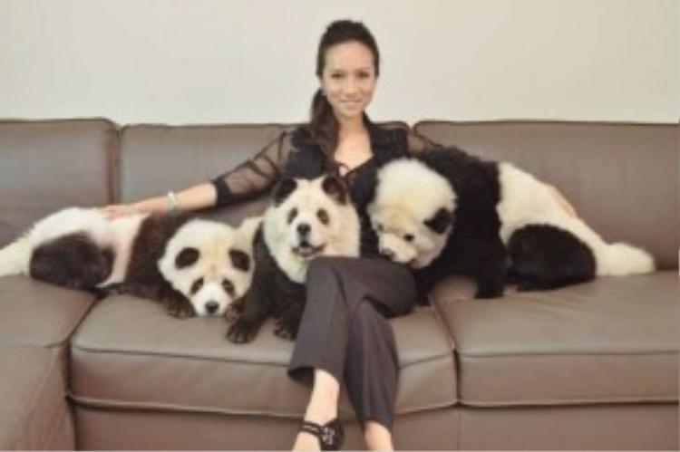 Dân mạng Singapore đang dậy sóng trước hành động của chủ nhân những chú chó Chow Chow vì đã nhuộm lông của chúng thành gấu trúc. Ngay lập tức, cuộc điều tra để tìm ra người thực hiện hành động này được mở ra.