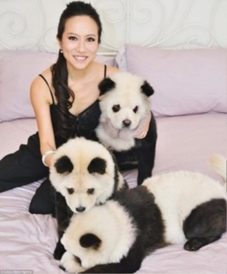 Bà chủ quyến rũ Jiang cho biết, vợ chồng cô mang ba chú chó đáng yêu từ Luân Đôn về Singapore năm ngoái. Để trông sinh động và lạ mắt hơn với bộ lông trắng muốt của loại chó Chow Chow, họ quyết định nhuộm lông cho chúng.