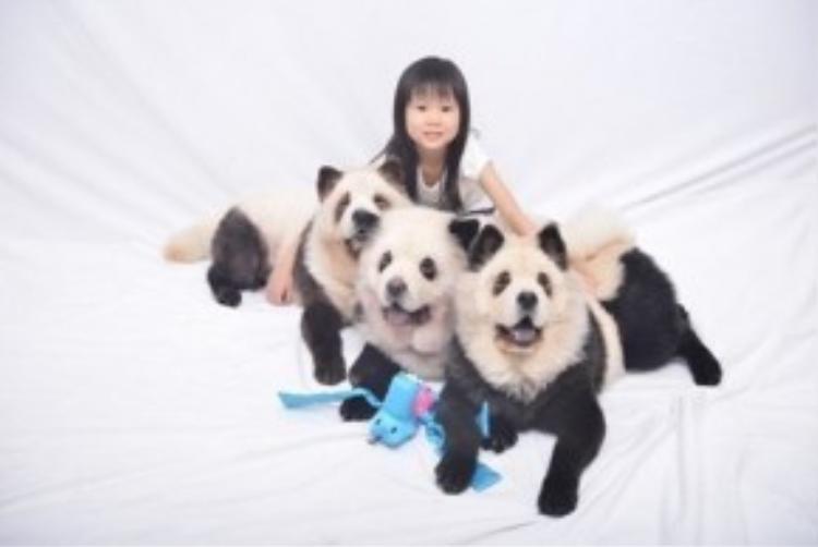 Chẳng mấy chốc, 3 chú chó của bà chủ Jiang đã nổi tiếng phủ sóng trên toàn mạng xã hội. Hàng trăm người ùn ùn kéo đến xin chụp ảnh cùng và không ngớt khen ngợi bộ lông xinh xắn của chúng.