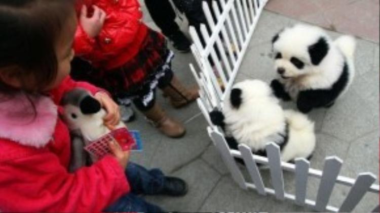 Hiệp hội này còn lên tiếng phản đối việc nhuộm lông động vật của Jiang vì những chất hóa học có trong thuốc nhuộm sẽ tác động xấu đến sức khỏe của những chú chó tội nghiệp.