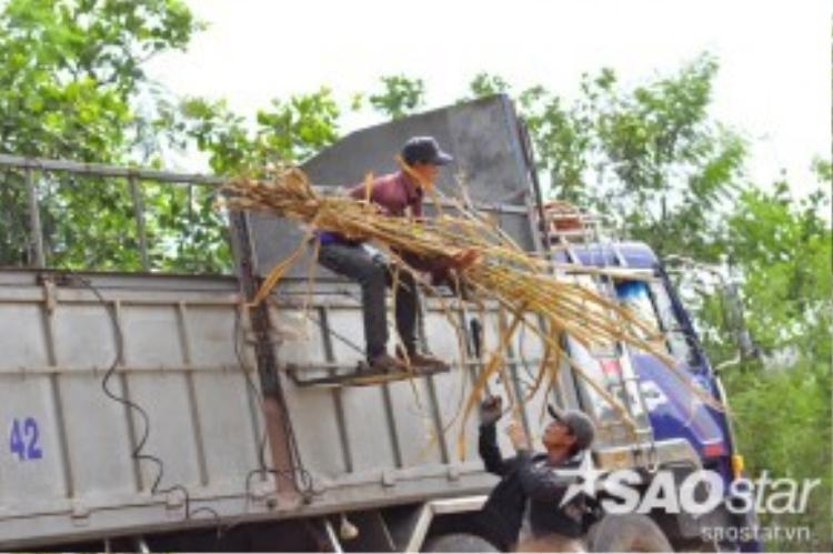 Một bó mía được cột dây sẵn nặng gần 20 kg được mọi người vác từ đồng và chuyền tay nhau lên thùng xe chở mía cao hơn 2,5 mét. Mỗi người mỗi việc, người khỏe làm việc nặng hơn người yếu, không ai có một lời so đo hay ganh tị với nhau.