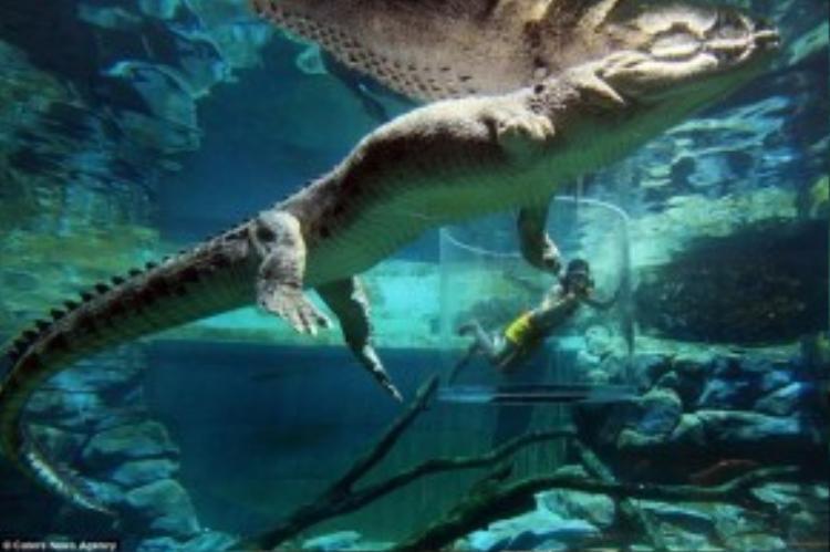 Lồng Tử Thần, Australia: Nằm trong công viên giải trí nổi tiếng Crocosaurus Cove ở Darwin, trò chơi Lồng Tử Thần cho du khách tiếp cận với những con cá sấu nước mặn hung dữ. Ảnh: Daily Mail.