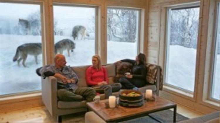 Vào hang ổ sói, Na Uy: Những du khách can đảm có thể lựa chọn nghỉ đêm ở Wolf Lodge giữa lãnh địa của bầy sói ở công viên Polar, Na Uy. Đây là cơ sở nghỉ dưỡng hạng sang đầu tiên trên thế giới nằm trong một khu nuôi sói. Ảnh: Travelweekly.