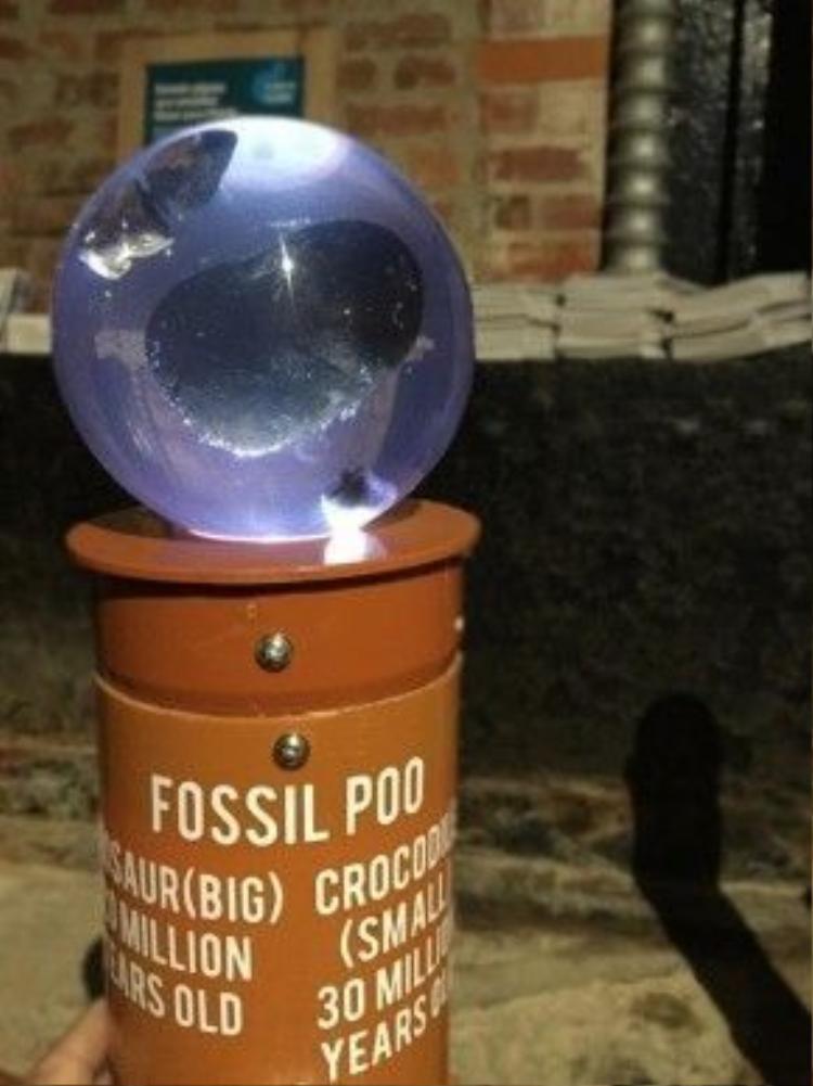 Phân hoá thạch từ 38 triệu năm trước cũng được trưng bày.