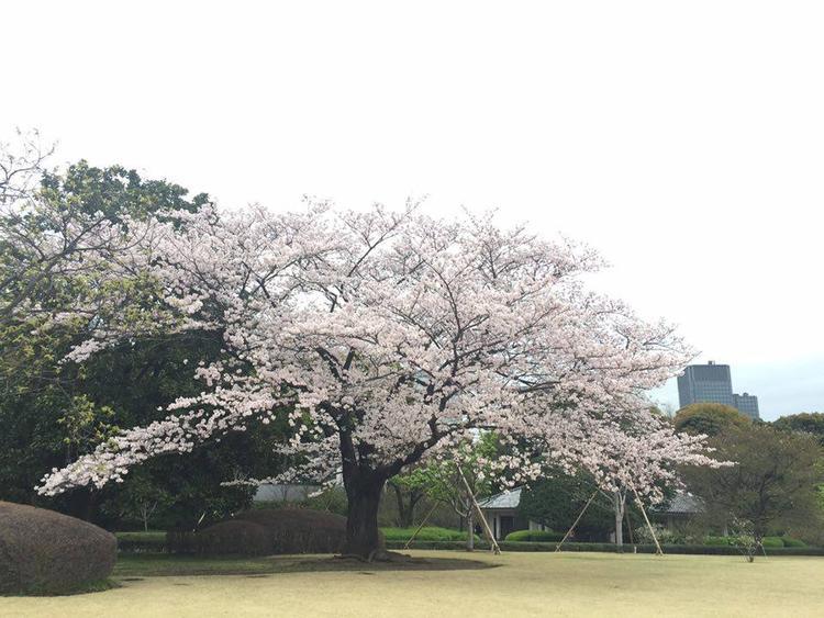 Mách thuê kimono đúng chỗ, chụp ảnh đúng chuẩn trên phố rực rỡ sắc anh đào Nhật Bản