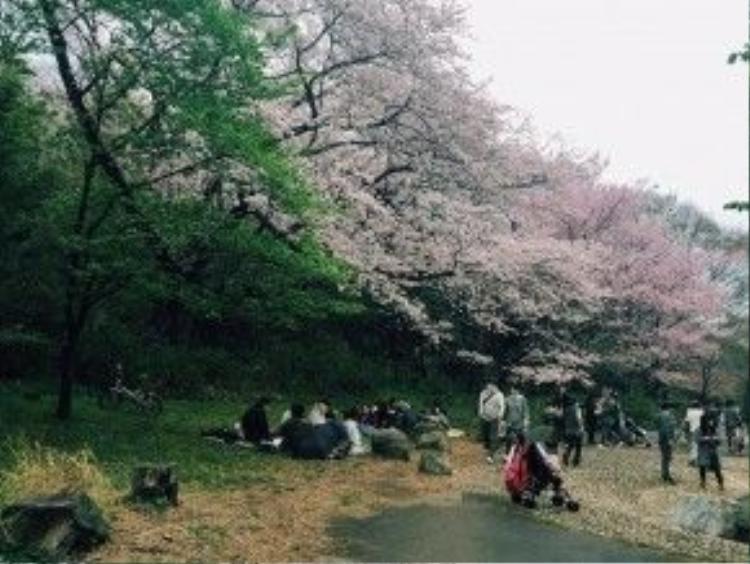Một góc công viên Sumida.