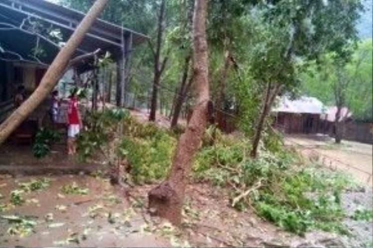 Mưa đá và lốc xoáy khiến cây cối đổ rạp, nhà cửa hư hại tại trường Phổ thông Dân tộc Nội trú xã Nhôn Mai, huyện Tương Dương. Ảnh: Lê Đào.