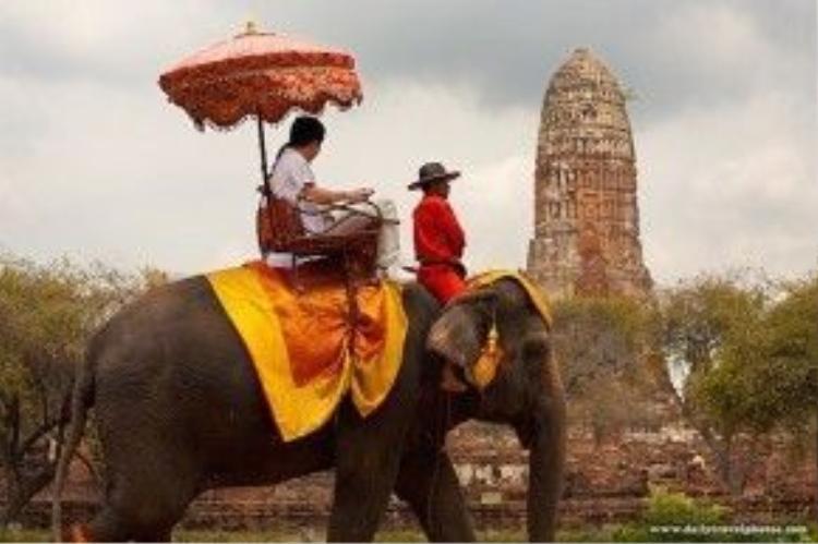 Ngày nay, voi vẫn thường xuyên đi lại trên đường phố Ayutthaya, nhưng thay vì mang trên lưng chiến binh, đó là du khách với sự thích thú trên khuôn mặt. Trong vài thập kỷ trở lại đây, số lượng voi chuyên chở đã giảm xuống hàng trăm con do một con voi trưởng thành tiêu thụ lên tới 270 kg thức ăn/ngày. Ảnh: dailytravelphoto.