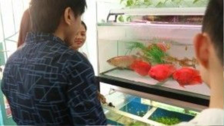 HLV Đan Trường lần đầu tiên đưa các thí sinh đi tham quan các bể cá của mình.