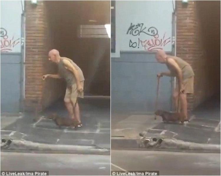 Ngưỡng mộ chú chó kiên trì nhất quả đất dẫn chủ ngoài 70 tuổi đi đường