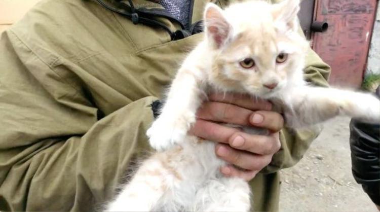 Ba giờ vất vả giải cứu mèo con mắc kẹt dưới gầm xe tải