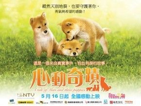 Poster của A Tale of Mari and Threqe Puppies