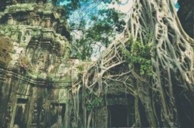 Đền Taprom còn được gọi là Lăng mộ Hoàng hậu, nơi những cây cổ thụ vĩ đại bao phủ nhiều công trình, tạo nên những hình thù cổ quái và hấp dẫn.