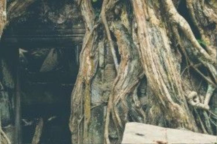 Bức tượng Phật mỉm cười nằm trong gốc cây hàng nghìn năm tuổi. Tại Angkor, người ta không thắc mắc về những điều kì lạ vì chẳng ai có thể có câu trả lời.