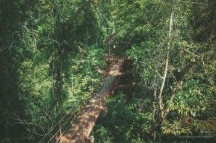Botanical Garden ở Thung Khai là địa chỉ dành cho những ai yêu thiên nhiên và mê… chụp cảnh.