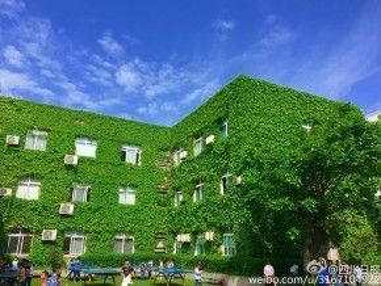 Toàn bộ ngôi trường được bao phủ bằng một màu xanh của cây nho