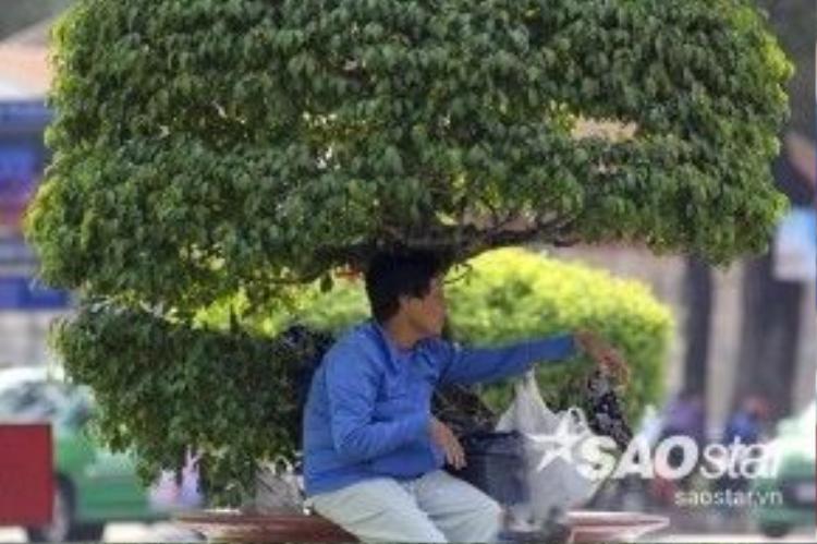 Một người phụ nữ may mắn tìm được bóng cây nghỉ ngơi trên đường Nam Kỳ Khởi Nghĩa quận 3.