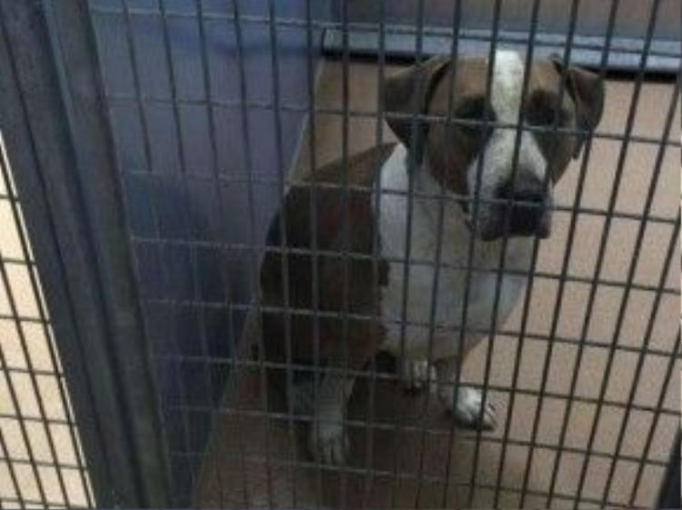 Con chó đã được đưa tới Trung tâm dịch vụ động vật hạt San Diego để cách ly. (Nguồn: Reuters)