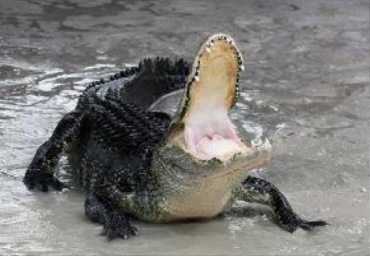 Không có cảnh báo cá sấu ở khu vực đó nhưng có biển cấm bơi (ảnh minh họa)