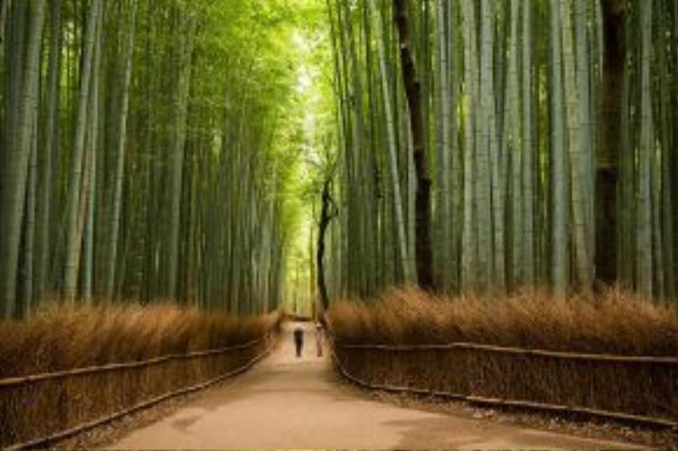 Rừng tre Sagano - kiệt tác thiên nhiên của Nhật Bản, nằm ở ngoại ô cố đô Kyoto. Đi giữa rừng tre, du khách như lạc bước trong một khung cảnh ở một xứ sở nào đấy khi vừa được chiêm ngưỡng vẻ đẹp kinh ngạc của tạo hóa, vừa được nghe những âm thanh thú vị theo từng lúc gió thổi.