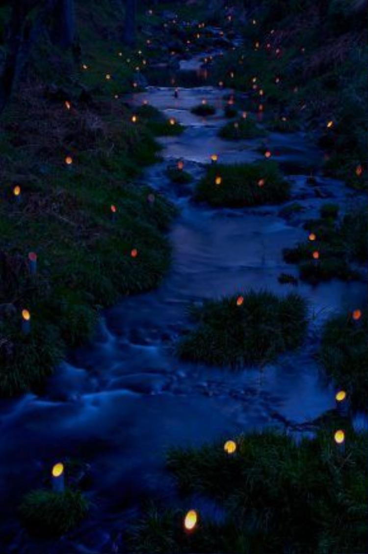 Lễ hội đèn tre tại Taketa (Oita) diễn ra trong ba ngày từ thứ sáu thứ ba của tháng 11.