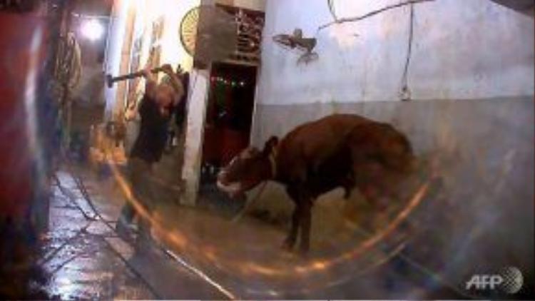 Hình ảnh làm thịt bò ở Việt Nam bị phản ứng vì quá tàn bạo. Ảnh: AFP
