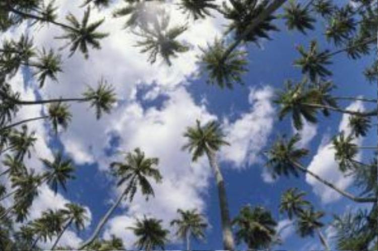 Những cây cọ vươn thẳng lên bầu trời xanh trên hòn đảo nằm giữa Thái Bình Dương. Tạp chí du lịch Conde Nast Traveler đã bình chọn Moorea là hòn đảo đẹp thứ ba thế giới.