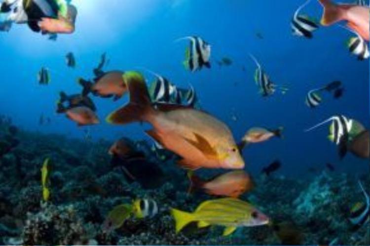 Những người thích lặn biển có thể thỏa thích khám phá vẻ đẹp của các rạn san hô và sinh vật đa dạng dưới hồ Lagoonarium de Moorea.