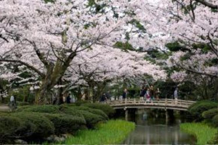 """Ngoài nhiều quận geisha, khu samurai, một lâu đài, nhiều đền chùa, một bảo tàng nghệ thuật đương đại tầm cỡ thế giới, và Kenroku-en - khu vườn công cộng thuộc hàng tuyệt nhất thế giới, Kanazawa còn là thủ đô vàng lá của Nhật và được UNESCO công nhận là """"Thành phố sáng tạo"""". Ảnh: Thenational."""