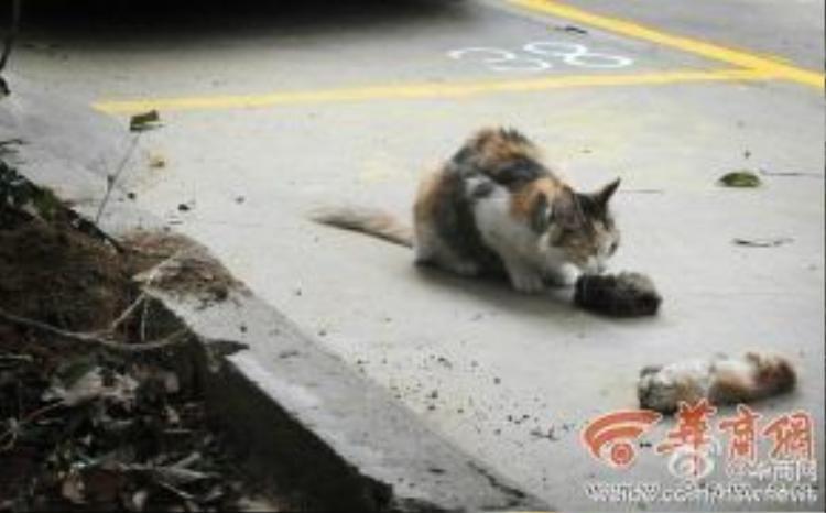 Mèo mẹ chứng kiến cảnh hai con bị giết chết dã man