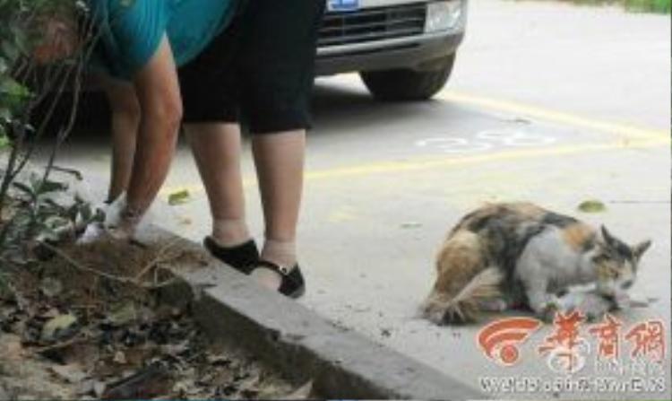 Bà Yang đã giúp đỡ mèo mẹ chôn cất hai đứa con