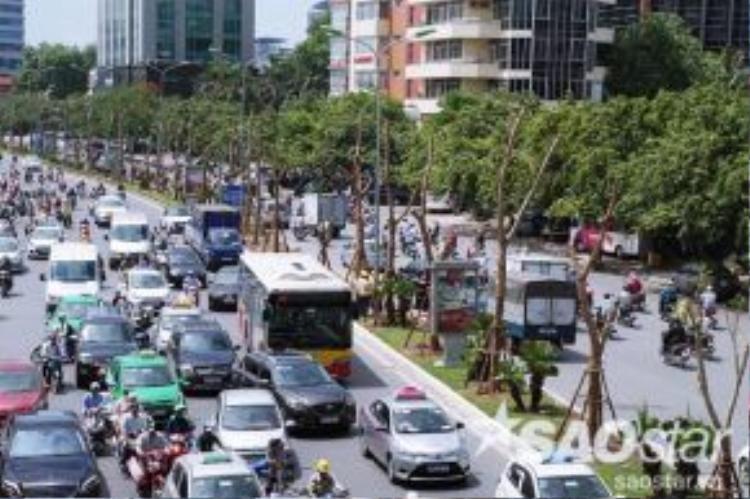 Chưa kể với lượng xe cộ lưu thông khá lớn, đặc biệt là sát với làn đường của ô tô nênnhững cây xanh này cũng sẽ khó phát triển như được trồng ở trên vỉa hè.