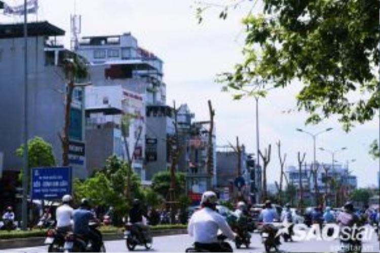 """Mặt khác nhiều lại người kỳ vọng hàng cây này sẽ làm thay đổi một cách """"thần kỳ"""" kỳ quan của tuyến đường đắt đỏ nhất Hà Nội này nói riêng và của cả thành phố nói chung, trong một vài năm tới."""