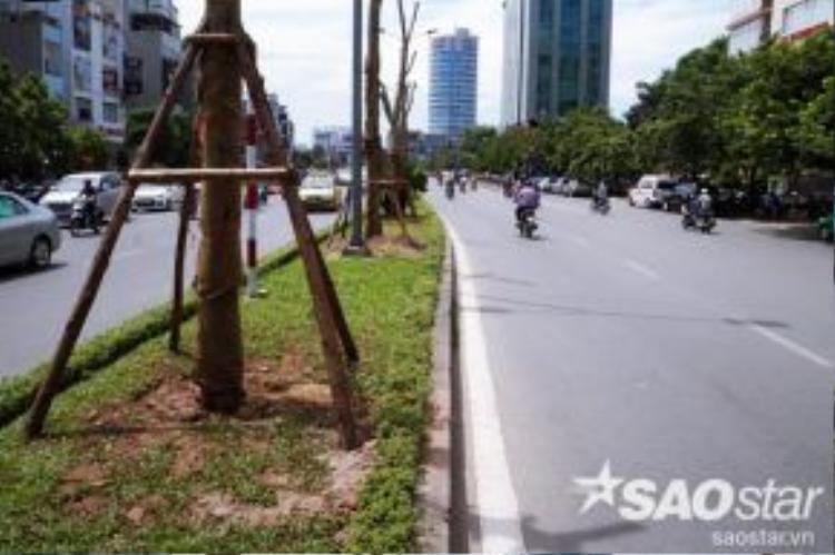 Khoảng cách giữa các cây chỉ khoảng 10m khiến cho mật độ cây trồng trong hàng khá dày. Nhiều người cho rằng việc trồng nhiều và cùng một loại cây như vậy trên một tuyến đường dài như vậy chưa chắc có thể sẽ mang lại hiệu quả về thẩm mỹ.