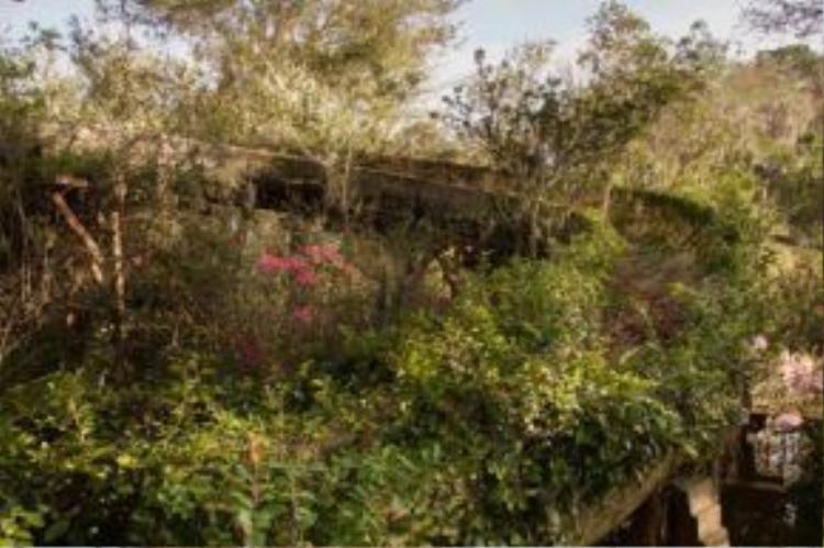 Một đường máng trượt bị phủ đầy các loài cây cỏ sau nhiều năm bị bỏ quên.