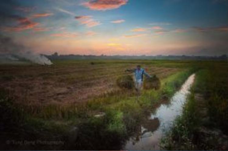 Khi vụ mùa về, lúa chín rực trải dài lên khắp các cánh đồng quê. Người nông dân đội nắng gió oi bức của ngày hè, thu về thành quả của gần 3 tháng lao động.