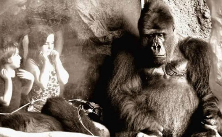 Nhìn những hình ảnh xúc động này, ai còn dám nói động vật không giống con người?