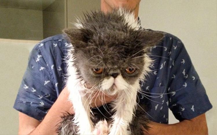 Tao đã bảo là người tao không bẩn, sao mày vẫn cứ tắm cho tao là sao hả Sen?