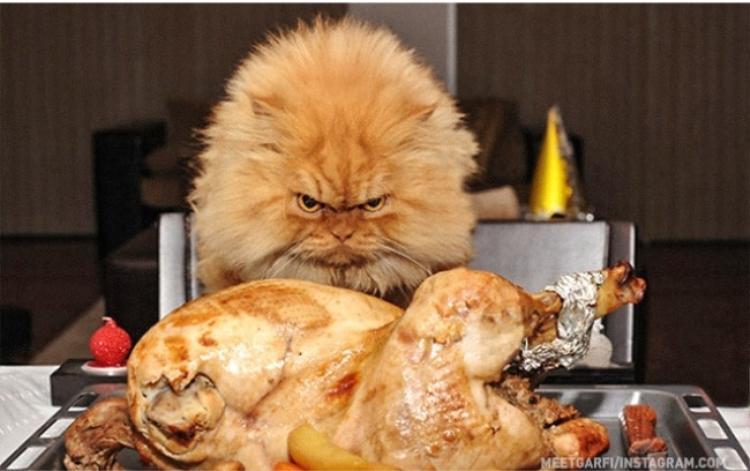 Mày nghĩ con gà này đủ với tao sao Sen?