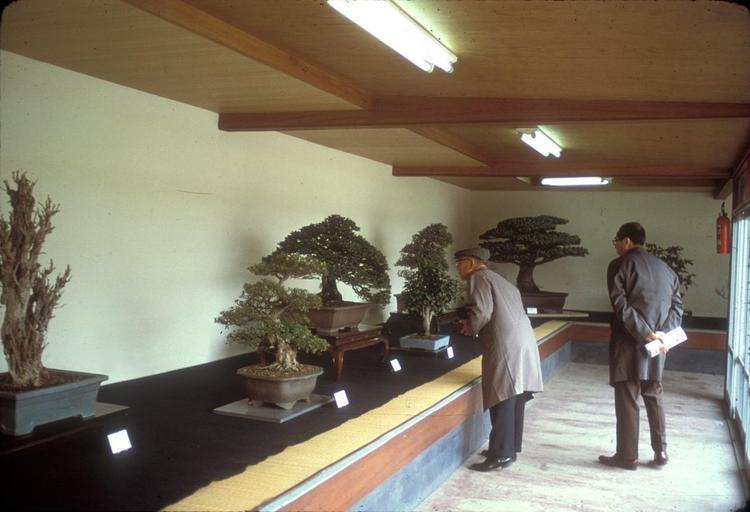 Cây Bonsai quý giá thời còn ở trong tư gia nhà Yamaki.