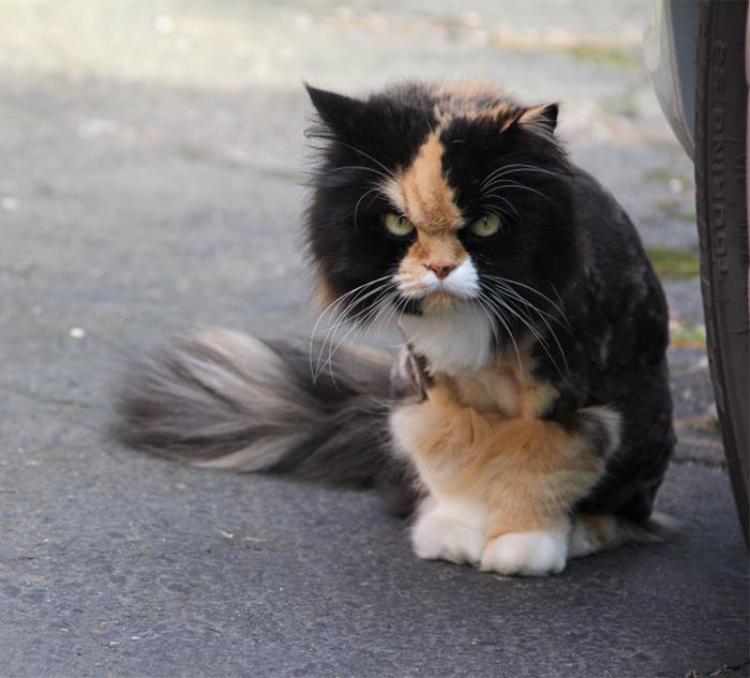 Có phải tui có nợ nần gì với con mèo này không nhỉ?