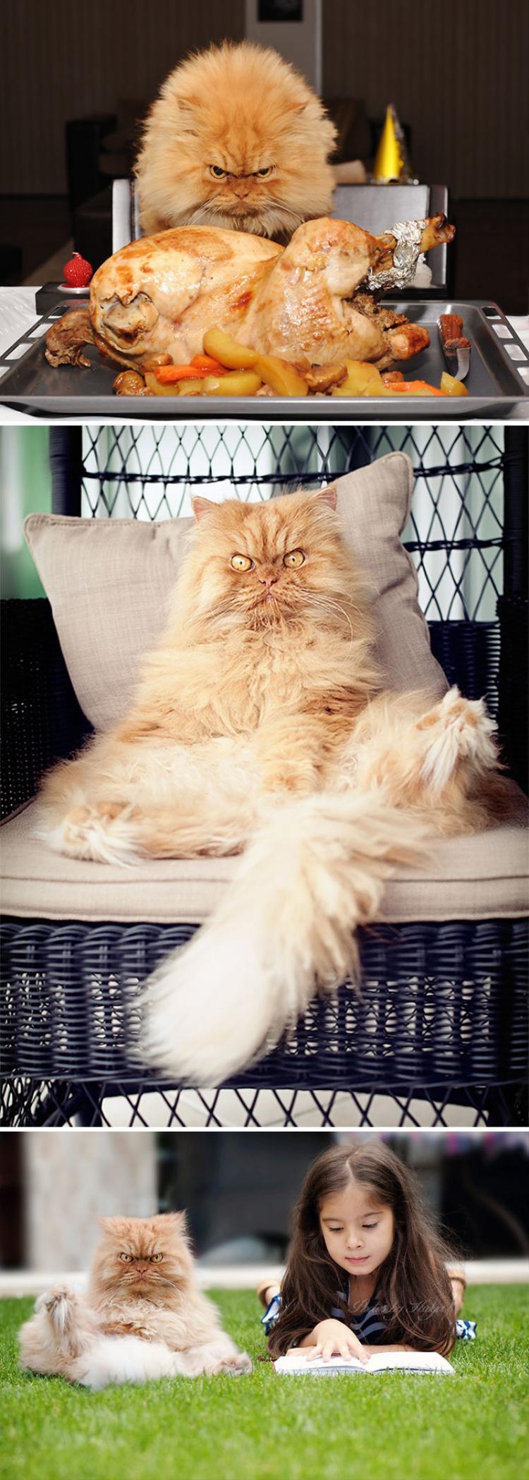 """""""Chưa thấy boss mèo nào được hầu hạ như tui sao?"""""""