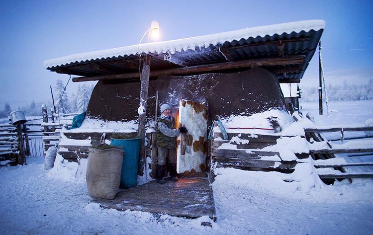 Gia súc được 'nhồi nhét' trong căn chuồng chật hẹp để giữ đủ ấm.